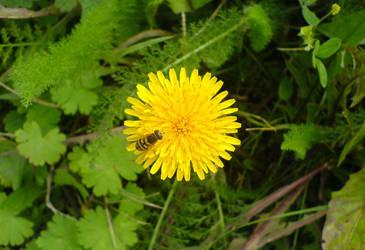A bee by Joannyta