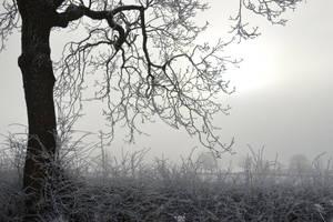 A hazy shade of winter... by cricketumpire