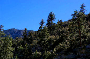 Mt. Charleston XVI by quick-with-fear