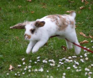 bunny jump fail? by BedtimeBunny