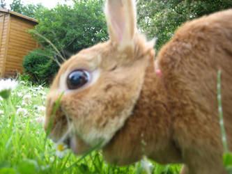 r.i.p. bunny by BedtimeBunny