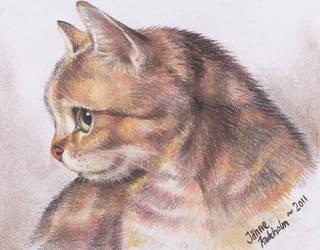 cat by BedtimeBunny