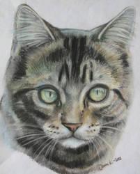 kitty by BedtimeBunny