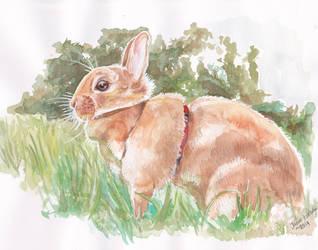 bunny in the sun by BedtimeBunny
