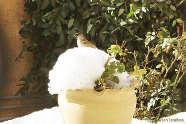 Bird-snow2 by doredore