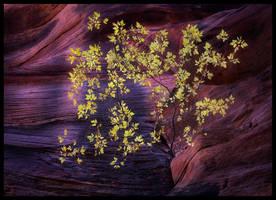Canyon Life by MarcAdamus
