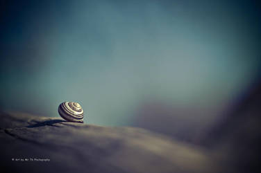 Snail Shell (Re-work) by Tb--Photography