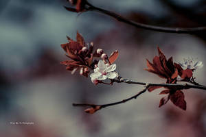 In Bloom by Tb--Photography