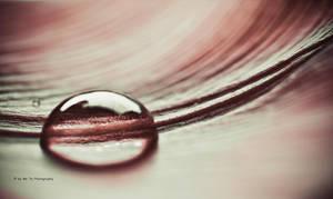 Drop (Tulpenblatt) by Tb--Photography