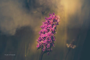 Die Farbe Lila (III) by Tb--Photography