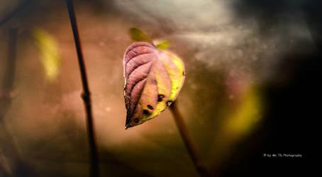 Ein Duft von Apfel und Zimt by Tb--Photography
