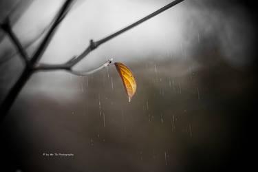 Rainy Days by Tb--Photography
