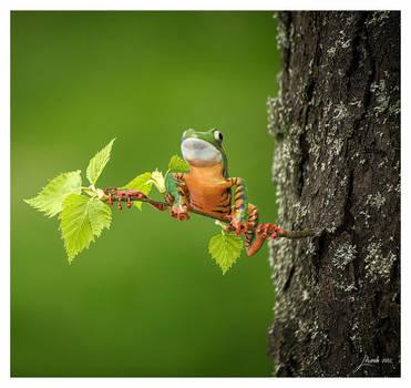 BALANCING TREE FROG by 12CArt