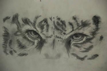 Tiger by annabellio