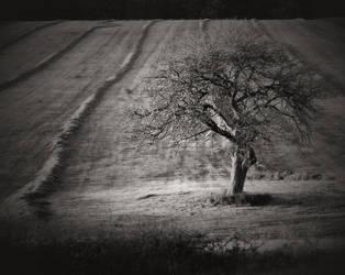 I Talk To The Wind  II by chrzaszczwtrzcinie