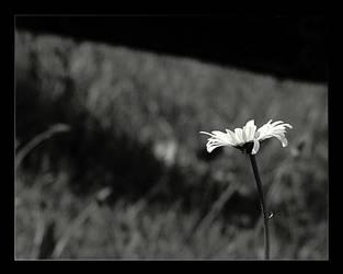 Black and White by chrzaszczwtrzcinie