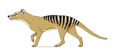 Thylacinus cynocephalus by Kazanlak10
