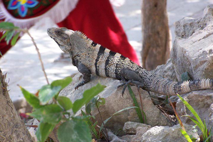 Mayan lizard by fanfictionaxis