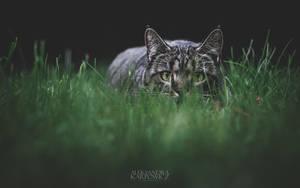 Masza 09 by silvena