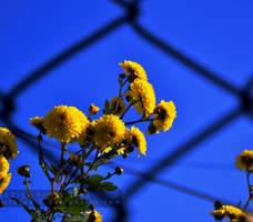 Le flower. by xTernal7