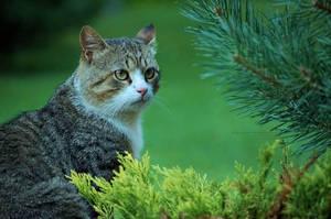 Cat by xTernal7