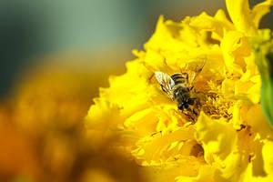 Bee on a flower by xTernal7