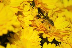 Bee by xTernal7
