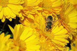 Not a Bee by xTernal7