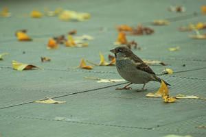 A bird by xTernal7