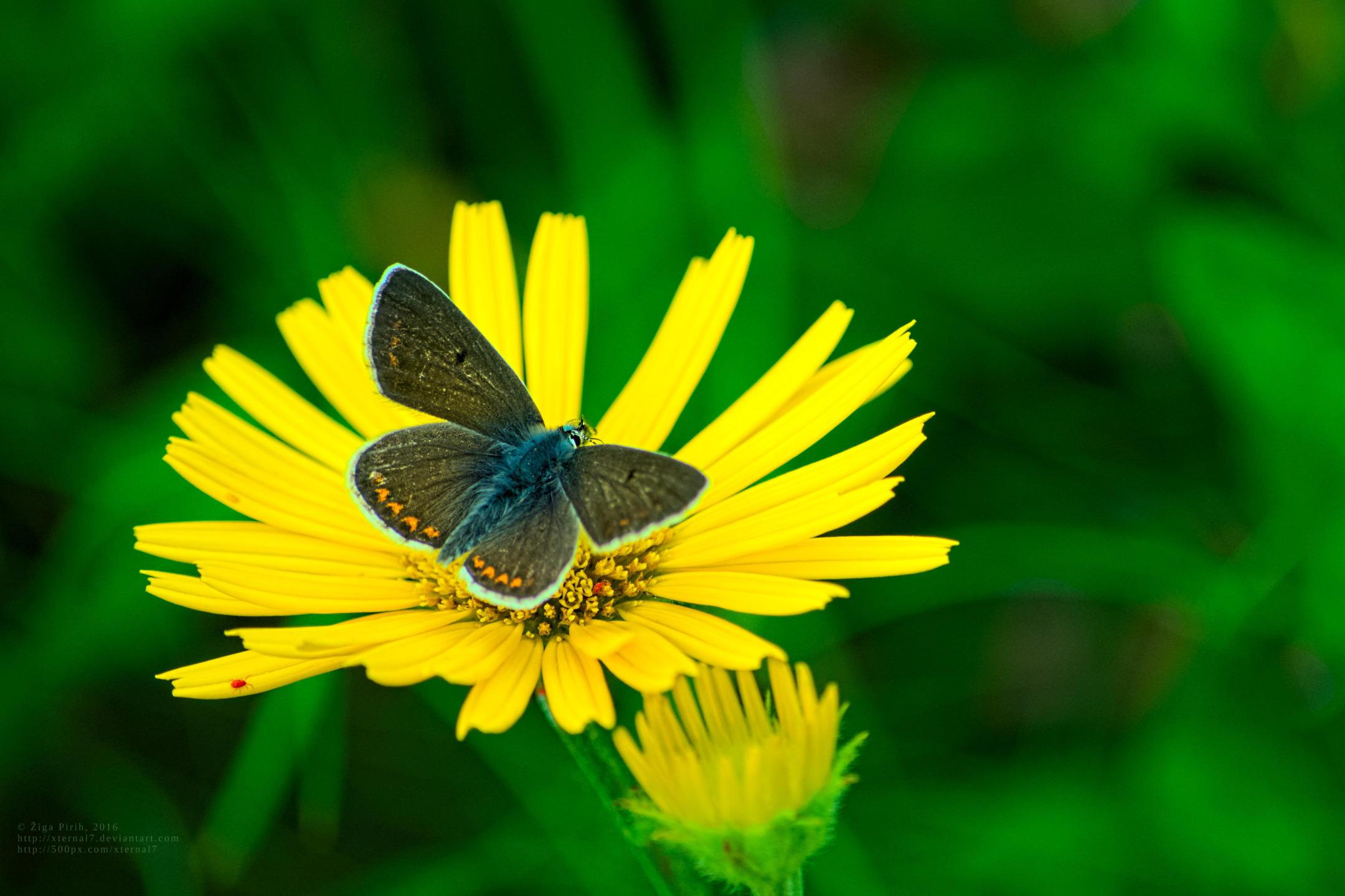 Butterfly by xTernal7