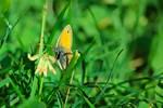 Butterfly IV by xTernal7