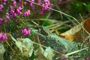 Lizard by xTernal7