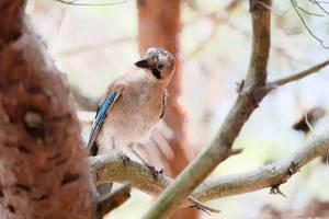 Bird 2 by xTernal7