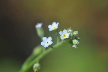 flower by Fearless--Vampire