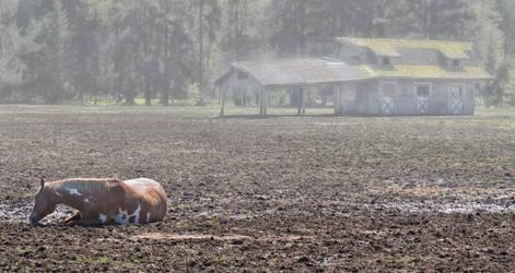 all the tired horses....... by Random-eyes