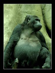 Gorilla's Reflections by digitaldreamz666
