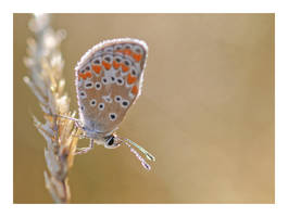 Twinkling butterfly by Ernestine-SB