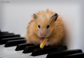 Hamster's Pause by milimo