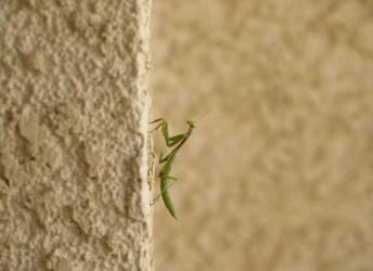 Mantis by MrJellyfish