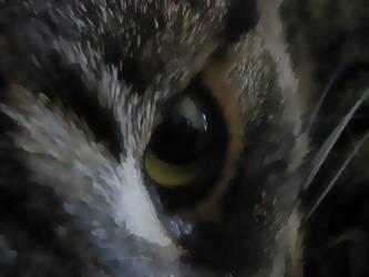 Cat eye by RYDEEN-05-2