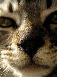 kitty cat. by tanayah