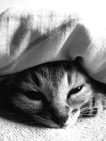 cute kitty. by tanayah