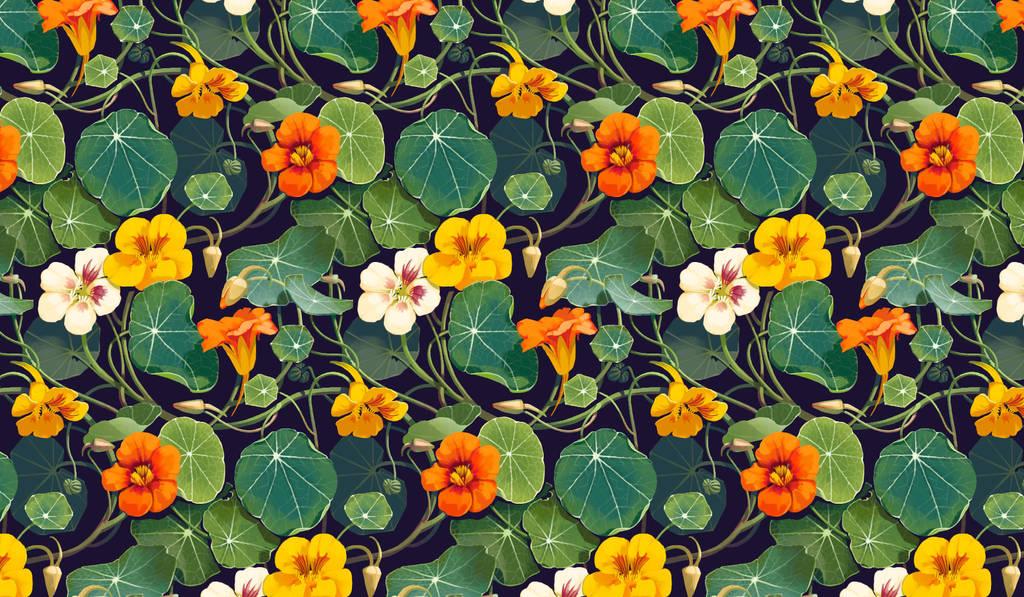 Nasturtium Flowers by CharlotteHintzmann