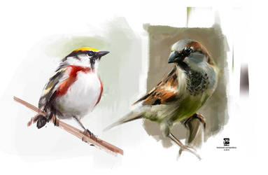 mooore birds by psdeluxe