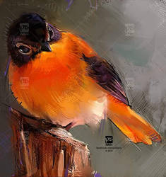 20161117 Orange Psdelux by psdeluxe