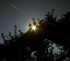 licht by alaister