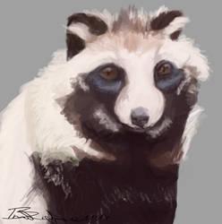 Raccoon Dog Portrait by Braweria