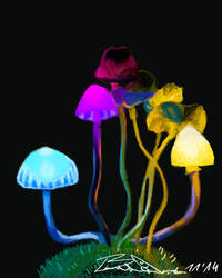 Bright shiny mushrooms by Braweria