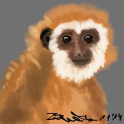 Monkey by Braweria
