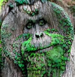Tree Orangutan by Aurora-Alley